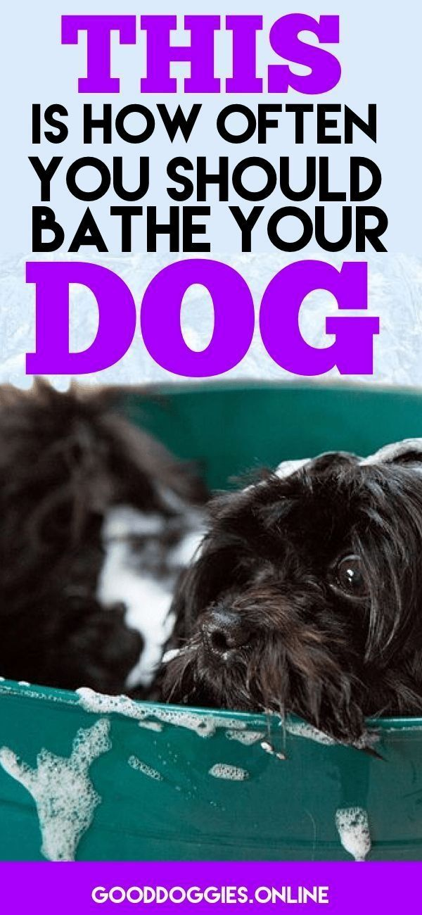 New Dog Training Ideas CLICK THE PICTURE for Lots of Dog