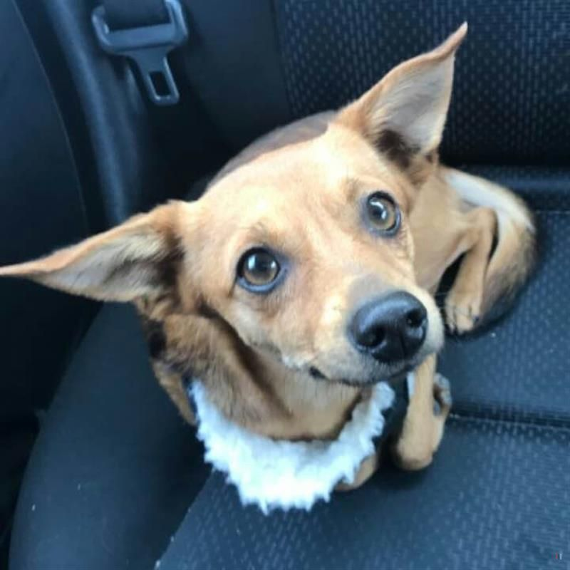 Lost Dog Male Columbus Oh Usa 43004 Losing A Dog Dogs