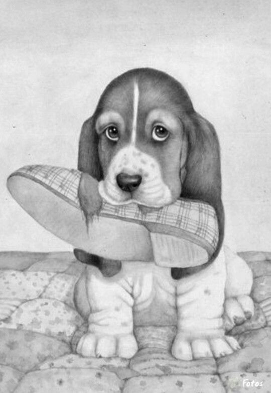 Coloring for adults - Kleuren voor volwassenen Adult Coloring - new coloring pages beagle puppies