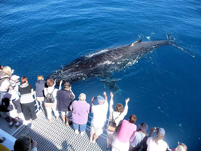 Go Whale Watching....saw some in alaska but not this big!