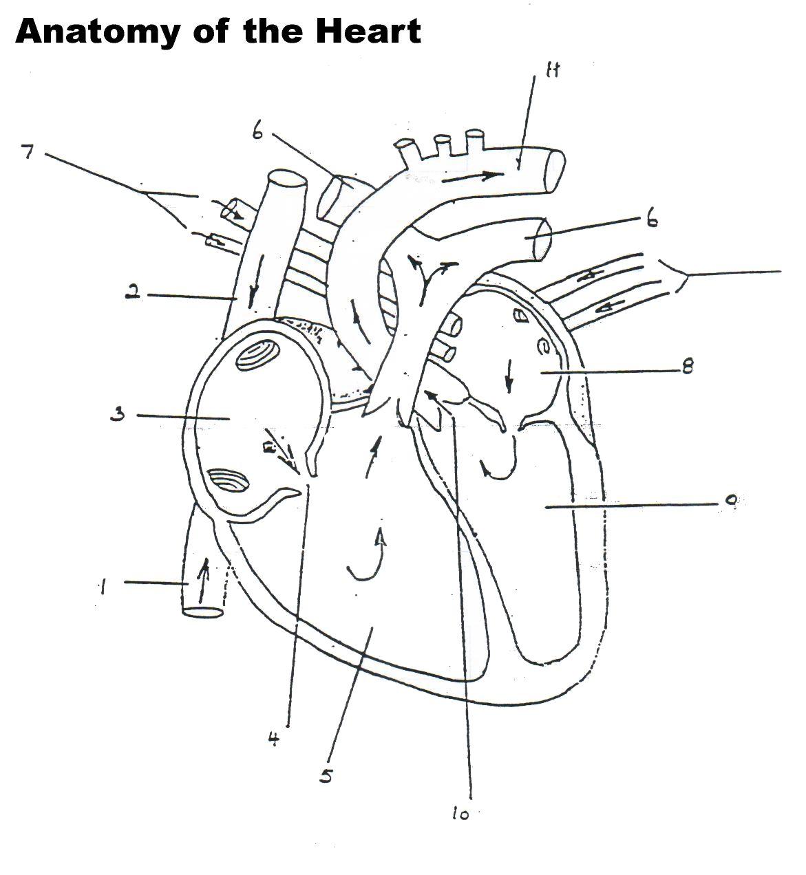 human heart worksheet blank human heart worksheet blank lung anatomy  [ 1171 x 1272 Pixel ]