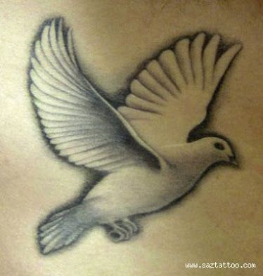 Realistic dove tattoos google search tat pinterest for Washing a new tattoo