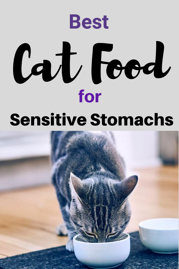 Tips And Suggestions For Cats With Sensitive Stomachs Best Cat Food Sensitive Stomach Cat Food Cat Food