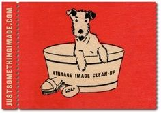 Postal perrito bañadera vintage.