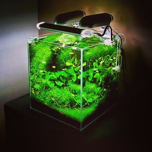 Nano planted tank ada aquario aquarium aquarius for Ada fish tank