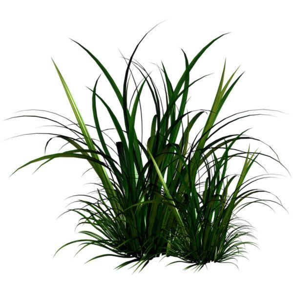 Holliewood Springfaeries Grass2 Png Arbres Photoshop Planter Des Arbres Arbre