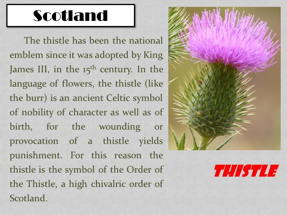 Scotland Symbols Google Search Drawing Symbolism Pinterest