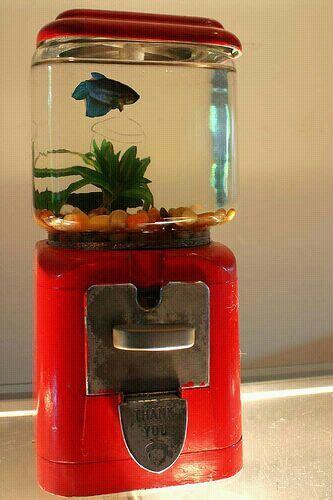 Gumball Machine Fish Tank #thriftstorefinds