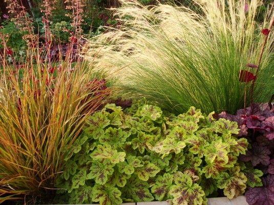 Heuchera grasses garden ideas pinterest heuchera for Contemporary garden grasses