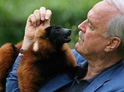 Avahi Cleesei Is An Endangered Species Of Lemur Named For John