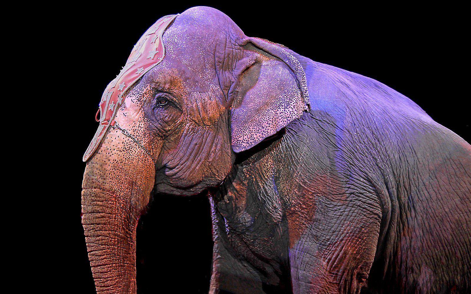 Australia S Largest Touring Circus Drops Elephant Acts Thanks To Public Outcry Elephant Sanctuary Elephant Animals