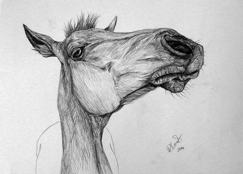 """Poppy"" Charcoal drawing by Natalie Brooks www.nataliebrooksartist.co.uk  Horses, art, drawings"