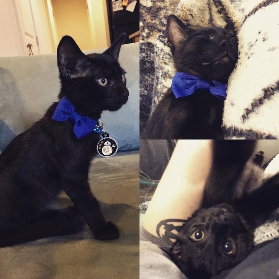 Meet Kylo Ren he's a derpy little rescue with some serious attitude! http://ift.tt/29K45VF