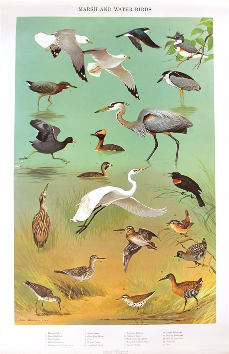 Four Bird Species Posters, Pennsylvania Game Commission, 1965, N4GNK