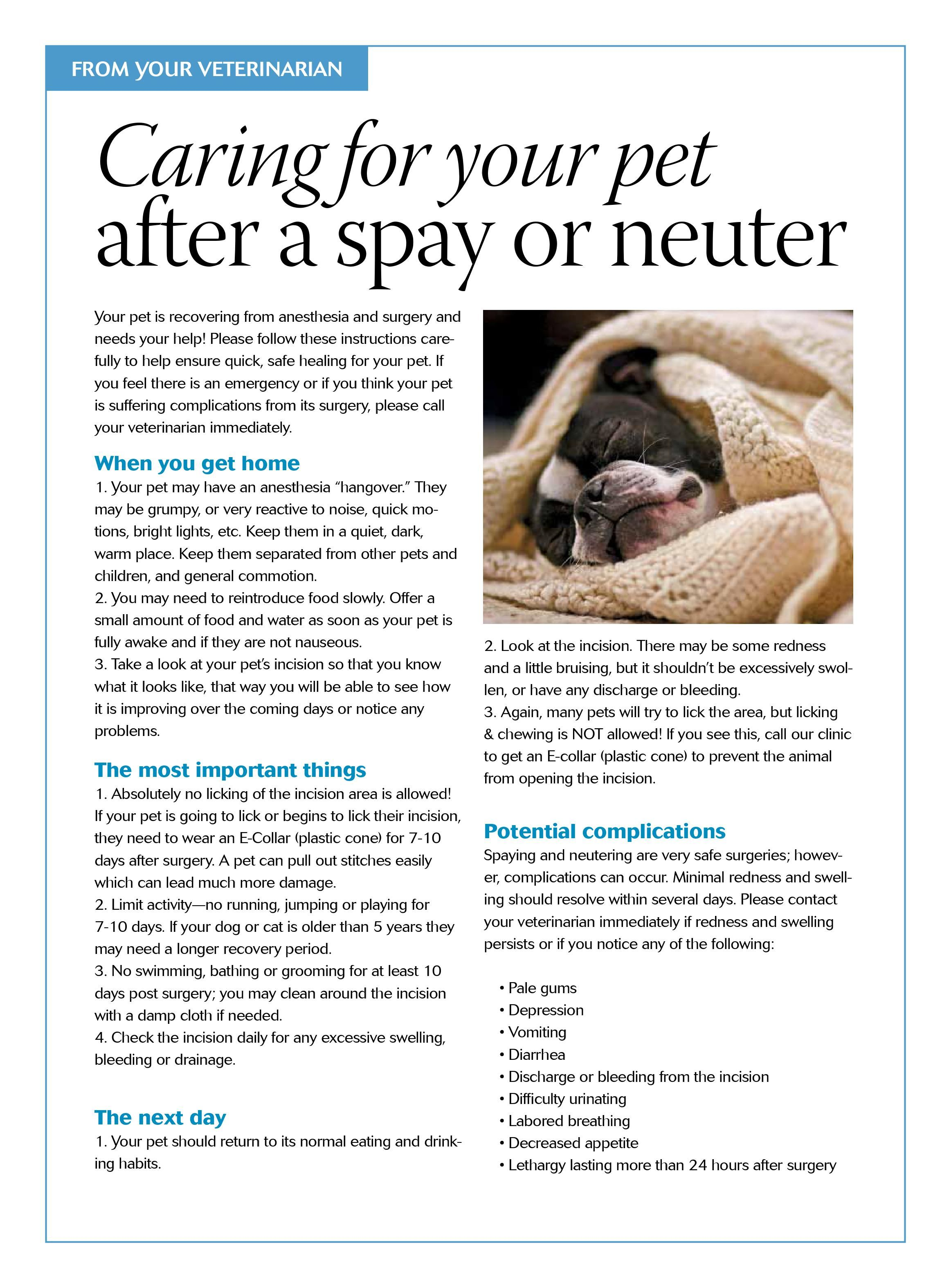 Caring For Your Pet After A Spay Or Neuter Dvm360 Petcare Dog Spay Recovery Dog Care Dog Spay