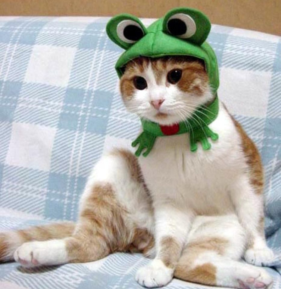 The Best Kitten Food In 2020 Cute Cat Costumes Cats And Kittens Pet Costumes