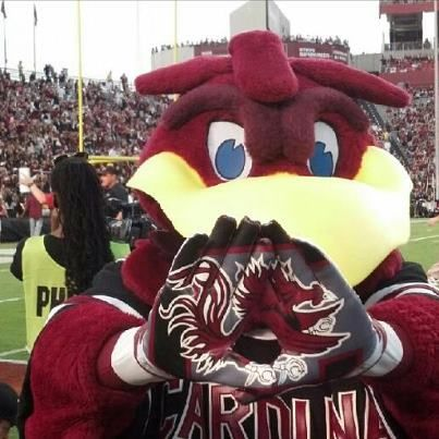 Cocky At Williams Brice On Game Day Carolina Gamecocks Football