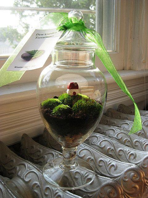 Pin by Sandra Superior on ~~Moss~~ Pinterest Moss terrarium
