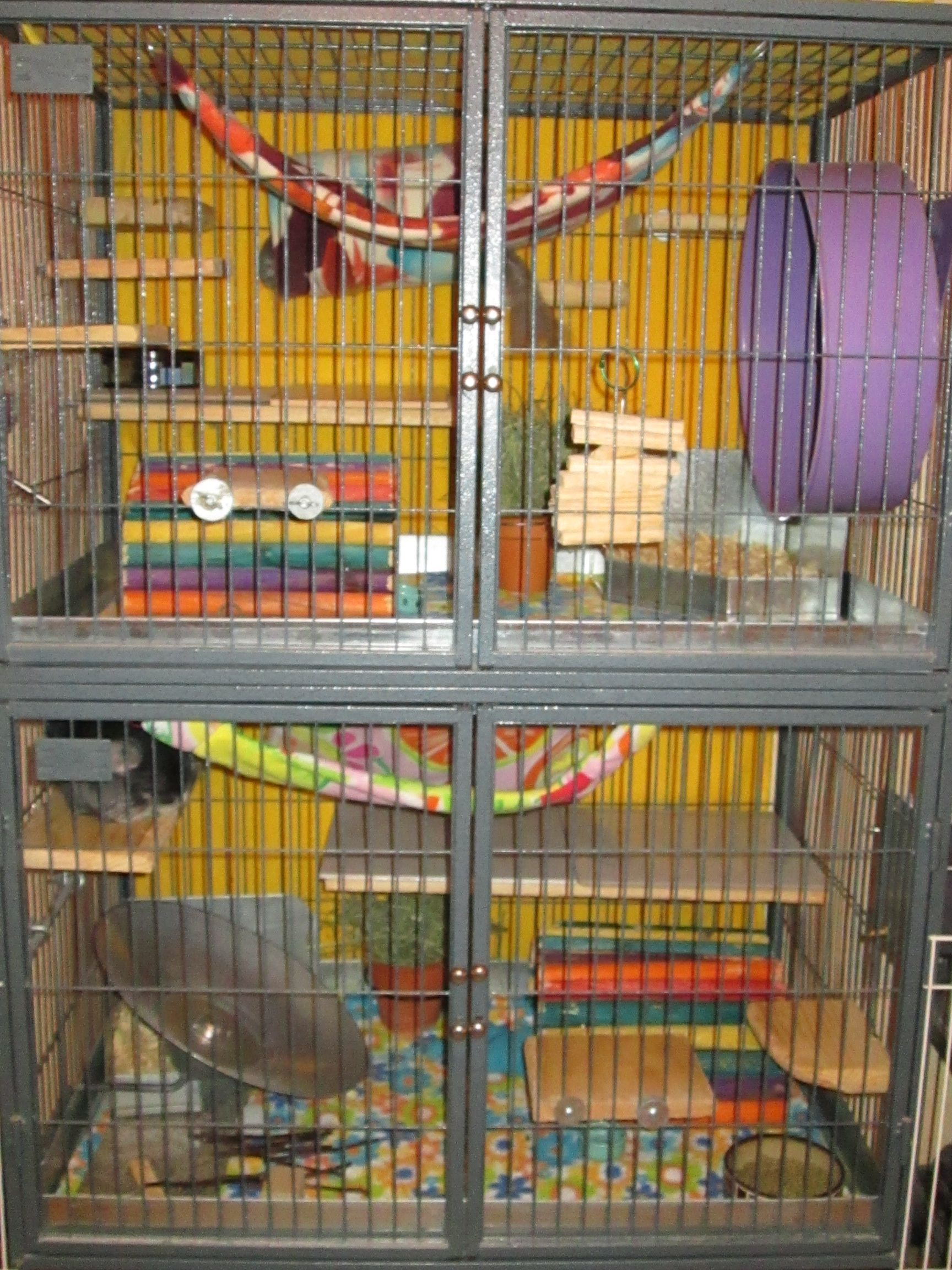 ferret nation cage with ided  partments for two separated chinchillas featuring fleece liners ferret nation cage with ided  partments for two separated      rh   pinterest
