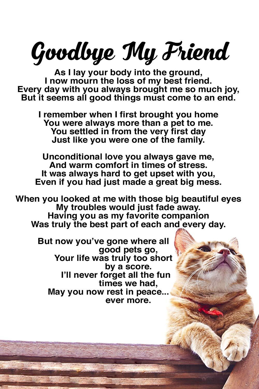 Rainbow Bridge Cat Cat Loss Poems Cat Loss Pet Loss Grief