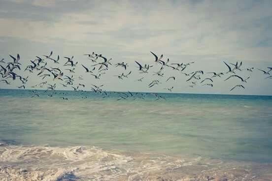 Playa de Chuburna