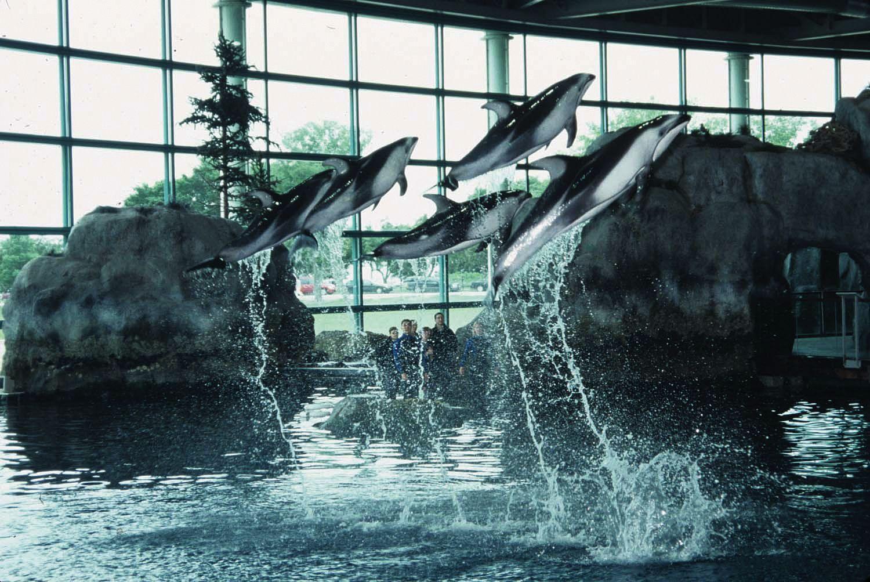 Shedd Aquarium Come Visit The 22 000 Animals Living In