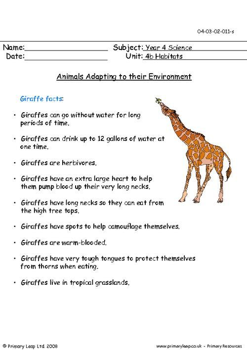 animals adapting to their environment giraffes worksheet places to visit. Black Bedroom Furniture Sets. Home Design Ideas
