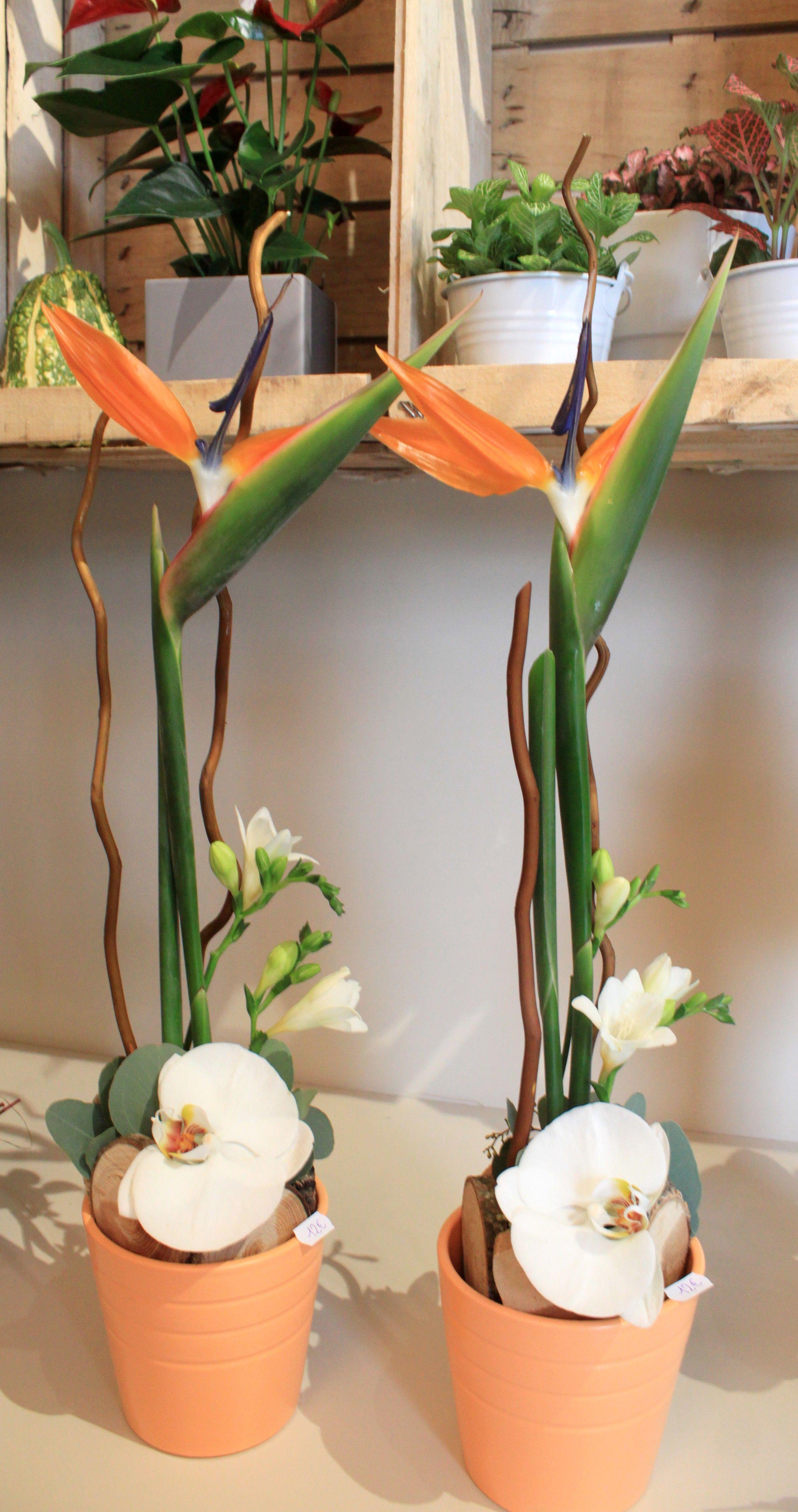 Oiseau Du Paradis Orchidee Composition Florale Lineaire