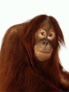 Fondos Animados Con Monos Divertidos Trust Pinterest Monos
