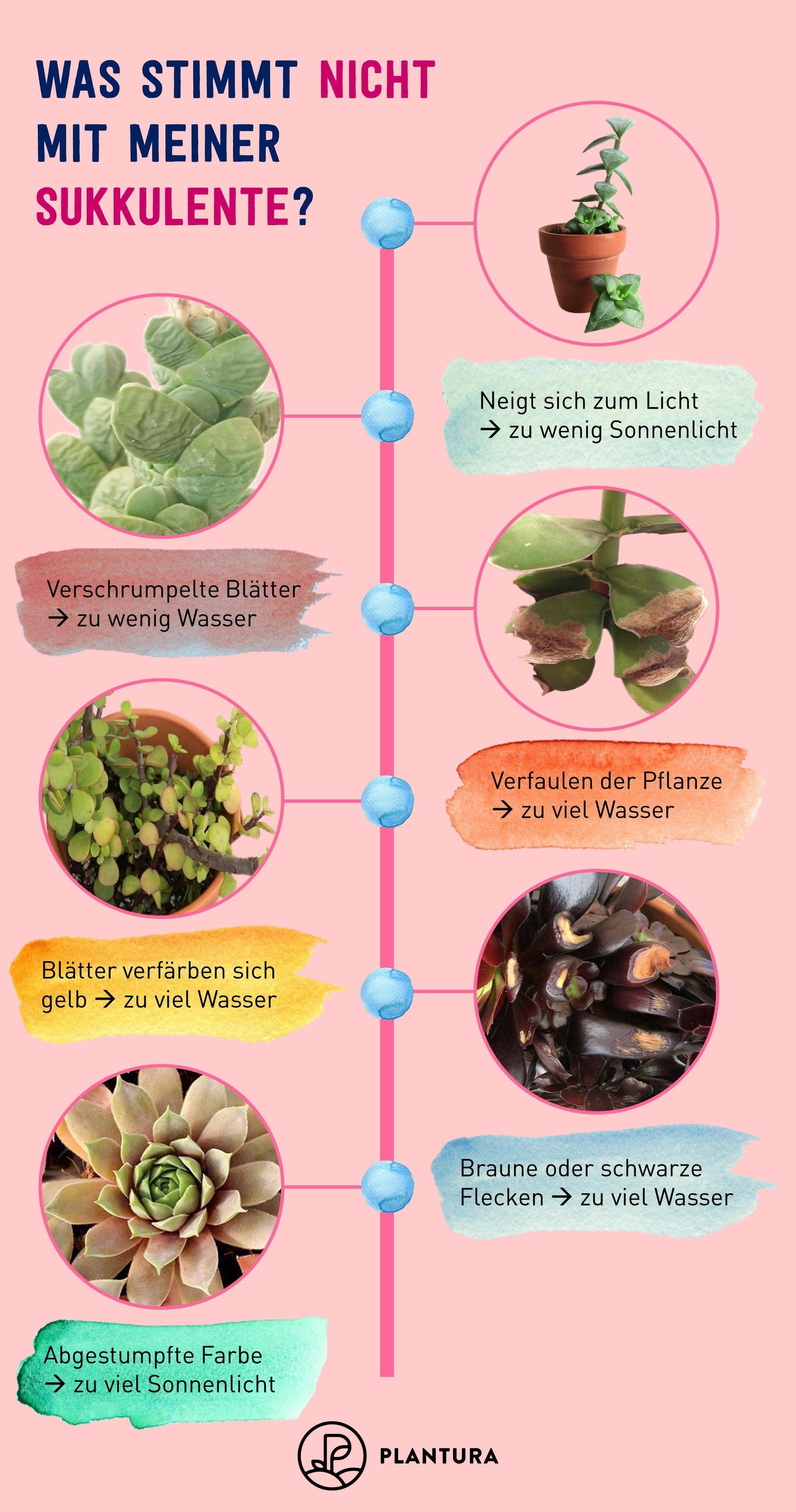 Kakteen & Sukkulenten richtig pflegen: Die 5 besten Tipps - Plantura