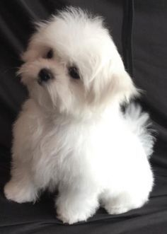 Pin By Jessica Wilson Mccoy On Dream Home Cute Small Dogs Cute Dogs Cute Animals