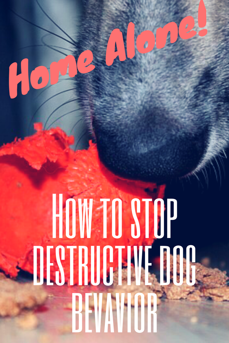 How to Stop Destructive Dog Behavior Puppy training tips