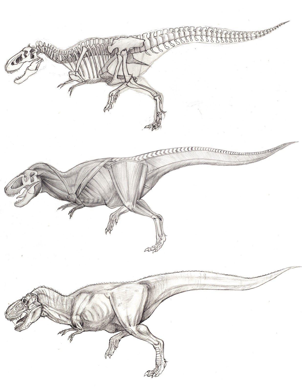 Junyi Li\'s Eyes: My first action figure - T Rex   anatomy ...
