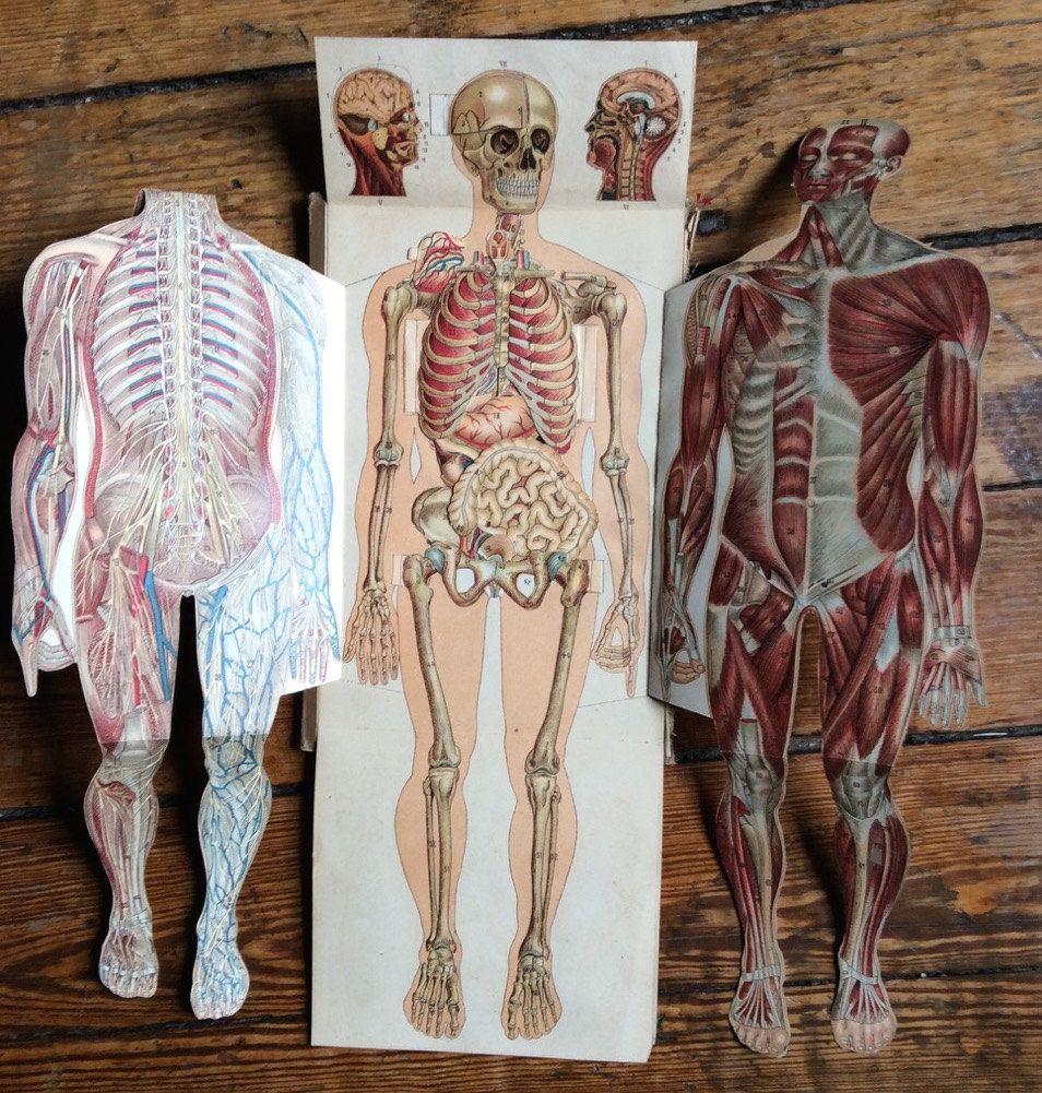 1902 human anatomy pop up print original antique medical interactive ...