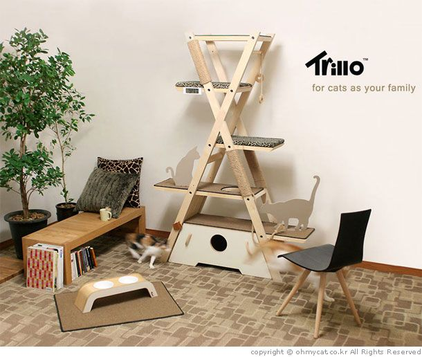 Trillo for cats as your family