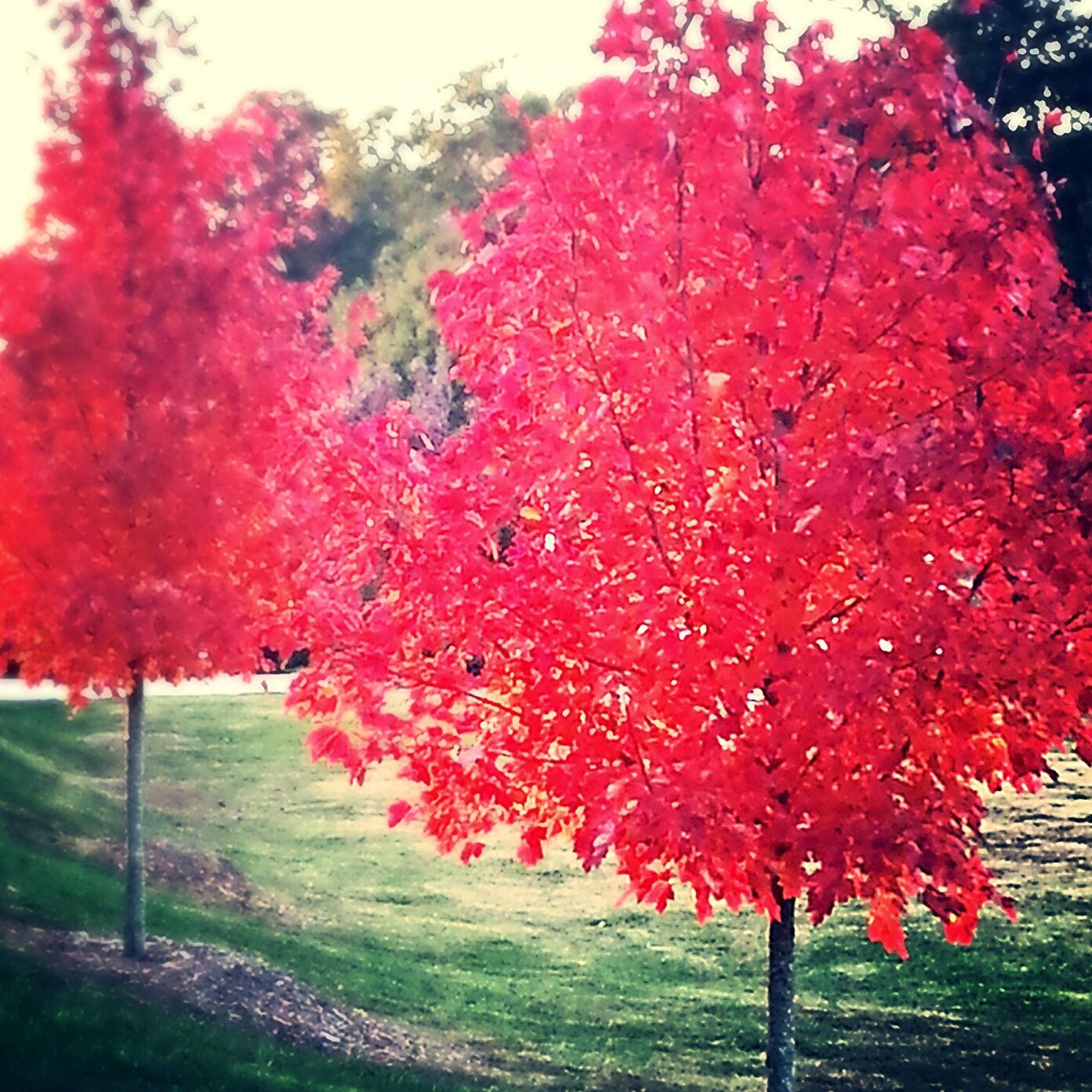 Fall color at Forsyth Fun activities, College, Student