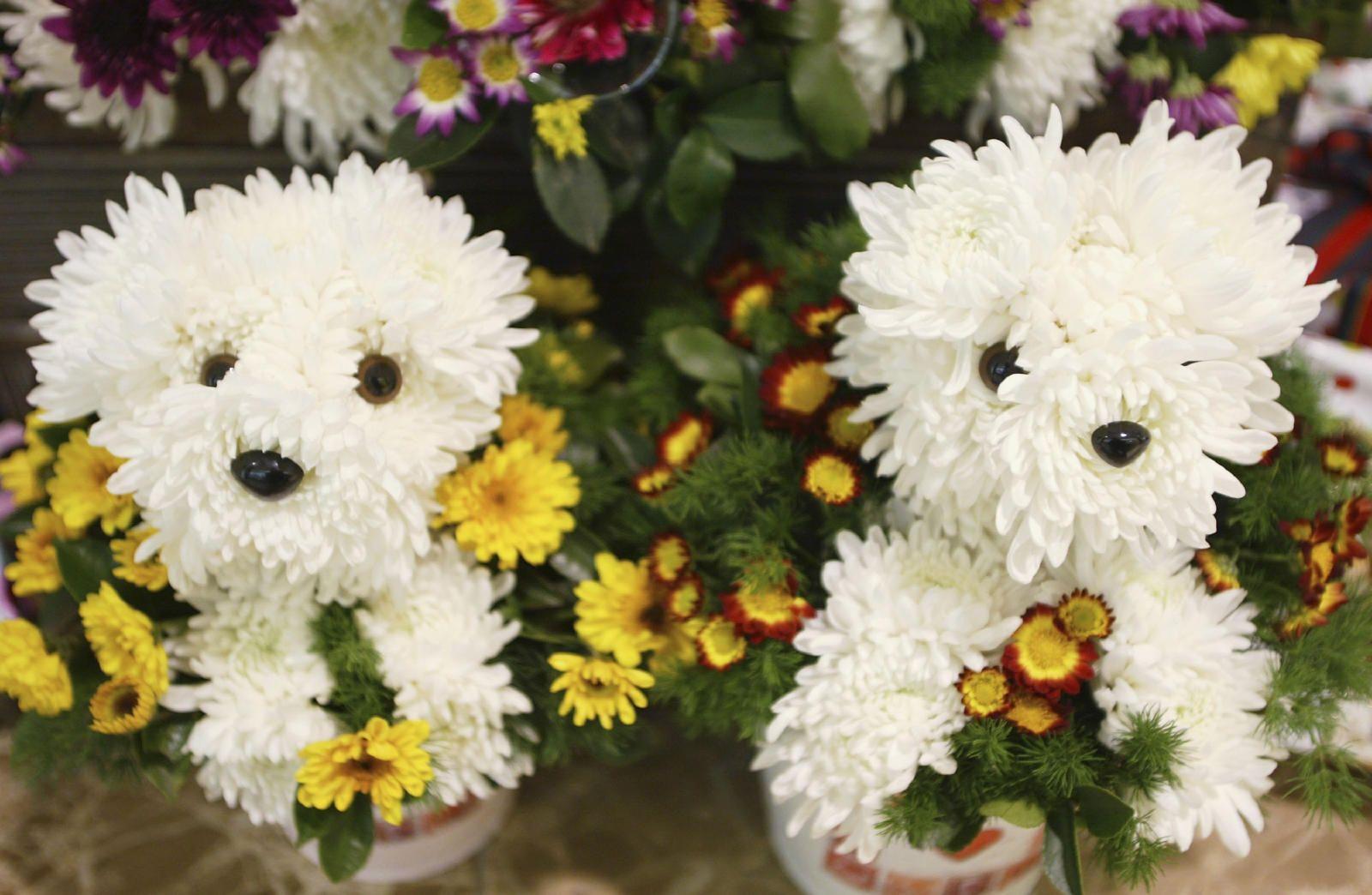 Toxic And Non Toxic Plants Plants Toxic To Dogs Plants Poisonous To Dogs Toxic Plants For Cats