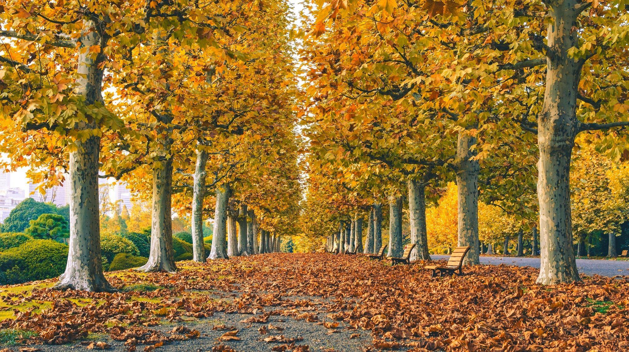 Обои leaves, trees, autumn. Природа foto 11