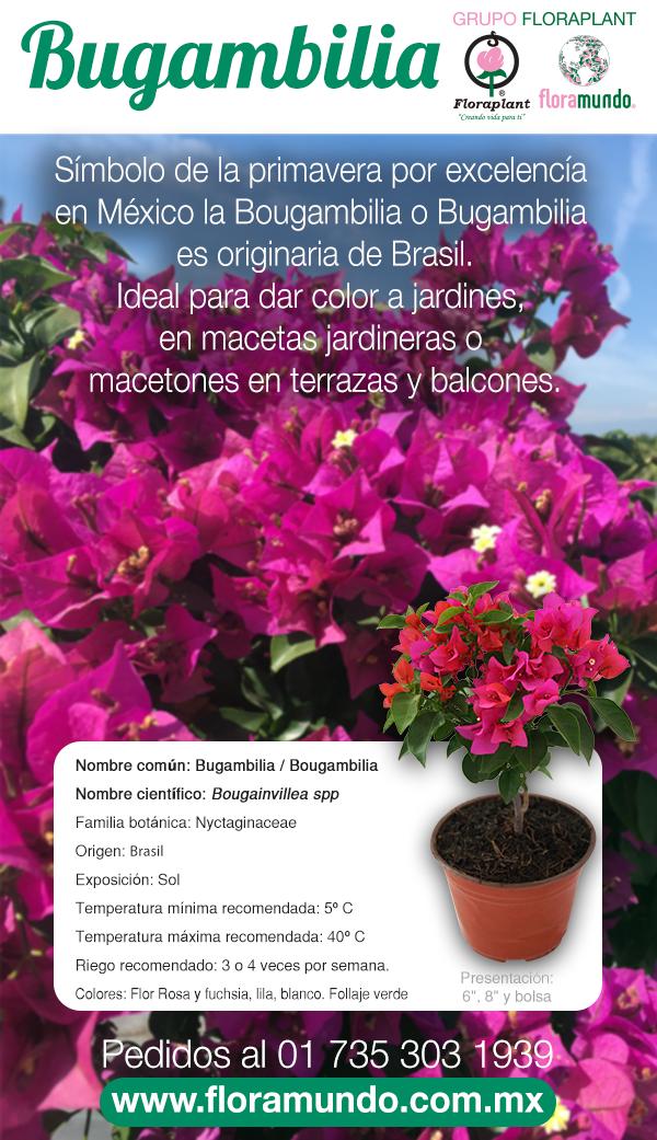 Bougainvillea Spp Cultivo De Plantas Plantas Plantas Ornamentales De Sol