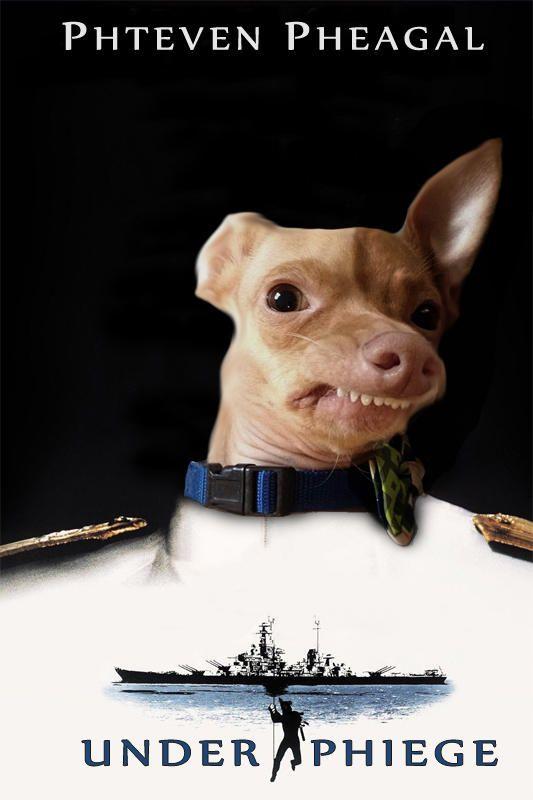 Phteven / Tuna the Dog: Image Gallery (List View) | TUNA ... - photo#26