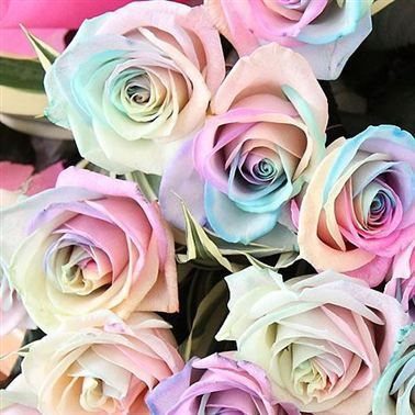 Roses Dyed Rainbow Pastel In 2020 Rainbow Roses Rainbow Flowers Pastel Wedding Theme
