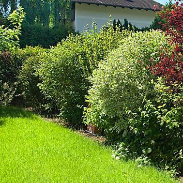 WurzelKur Neue Blüte für alte Obstbäume Heckenpflanzen