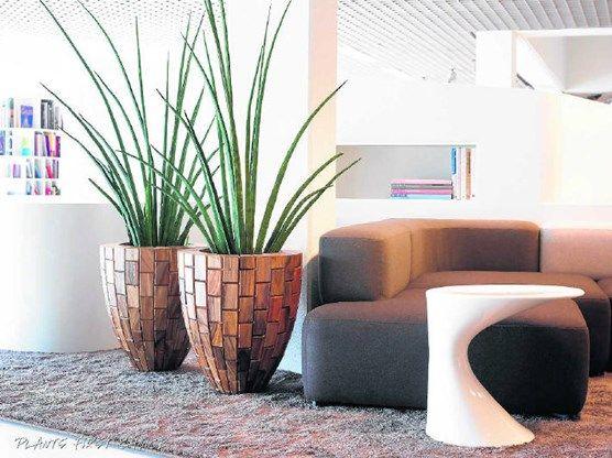 Pin By Susanne Bosman On Bloempotten Planters Interior Plants Interior Design Plants Decor
