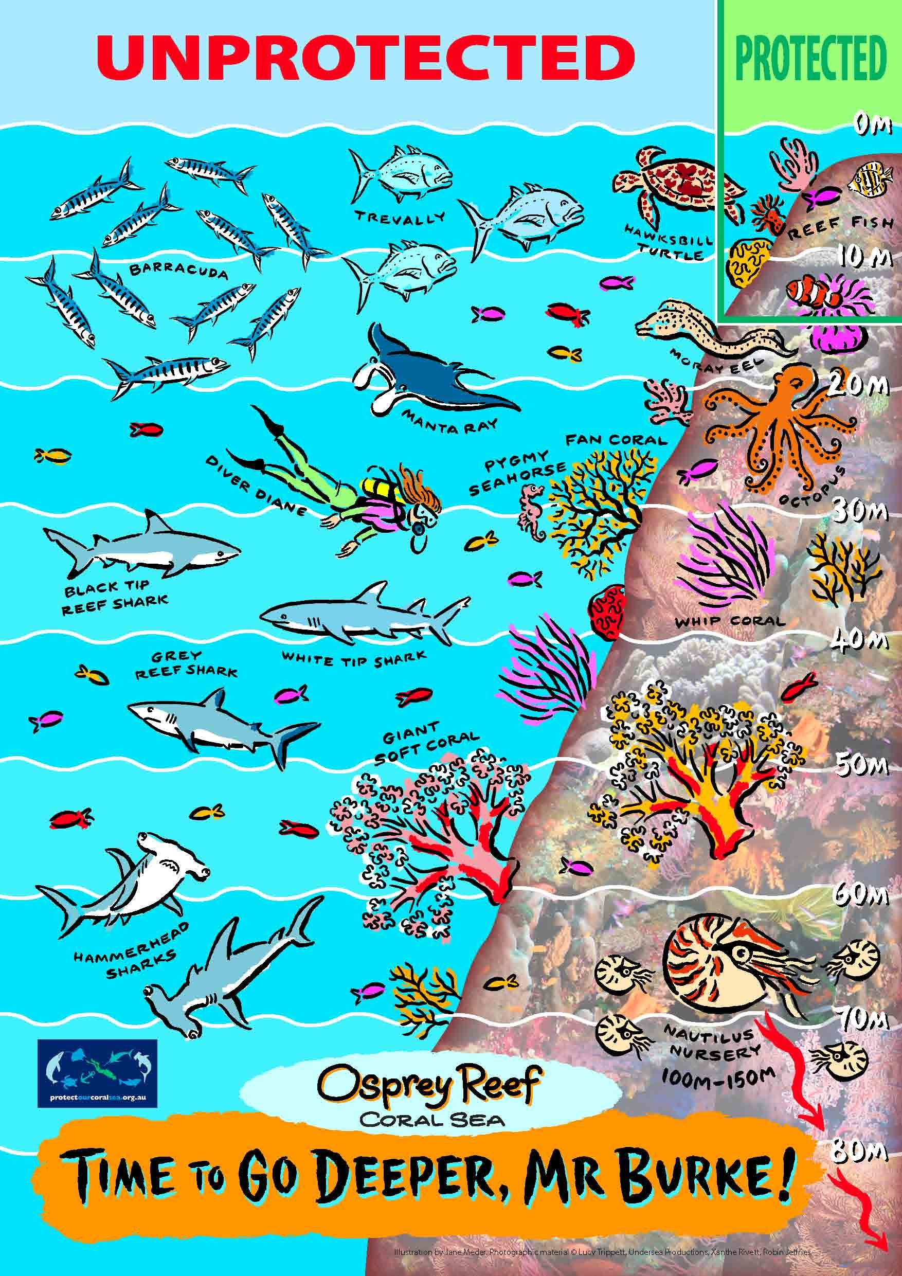Marine reserves under threat. Tell Australian Env Minister 'It's Time to Go Deeper!' The Osprey Reef in Coral Sea needs more protection. Send your letter to Tony Burke