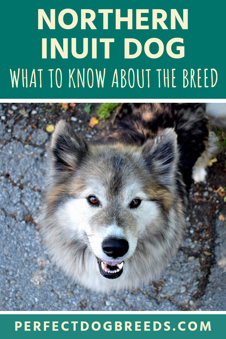 Pictures Of Northern Breed Dogs