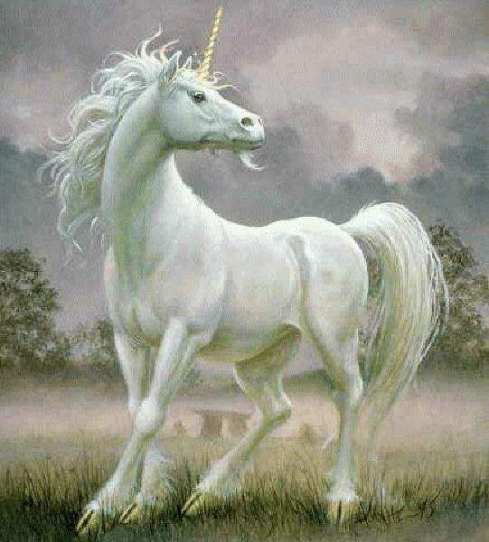 Unicorn And Fairies Unicorn Fantasy Unicorn Pictures