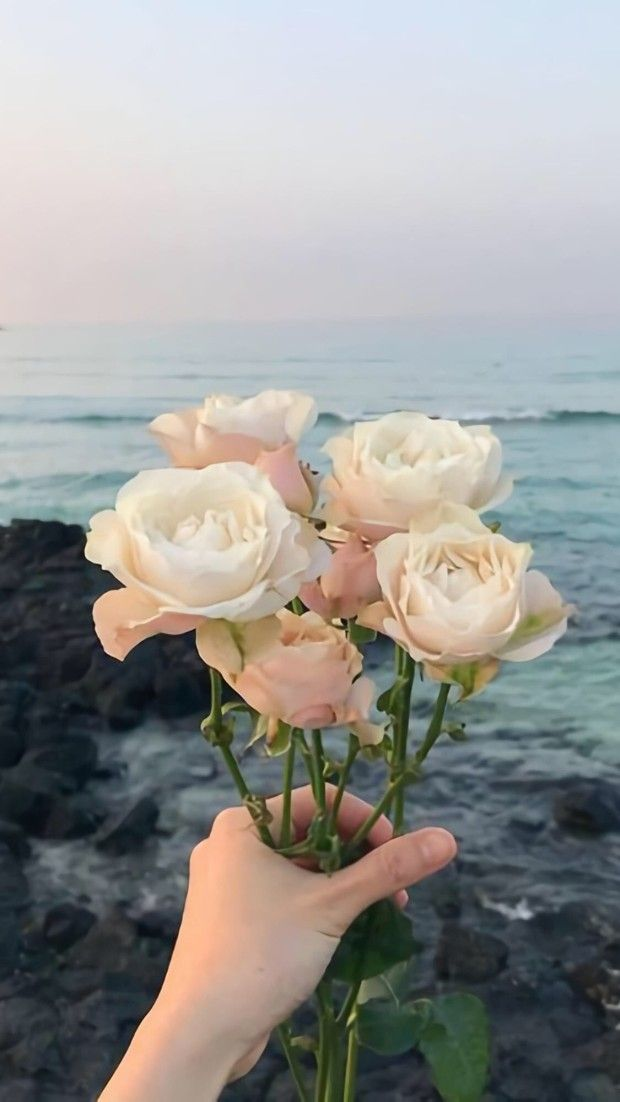 White Rose In Hand White Roses Wallpaper Flower Aesthetic Beautiful Flowers Wallpapers