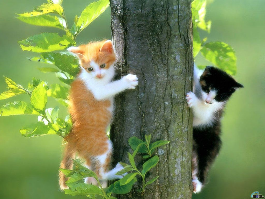 Its A Spider Run Cat Wallpaper Kittens Cutest Cute Animals