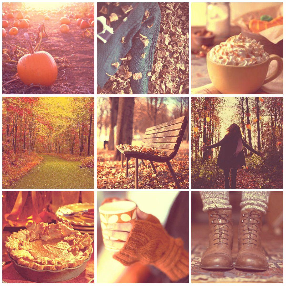 The-autumn-coloured-world - favorite season: autumn.