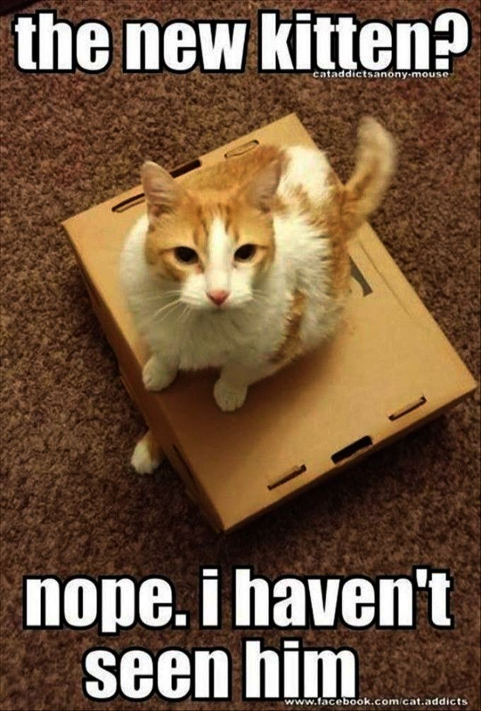 Get some > Funny Cat Photos Free google Funny cats
